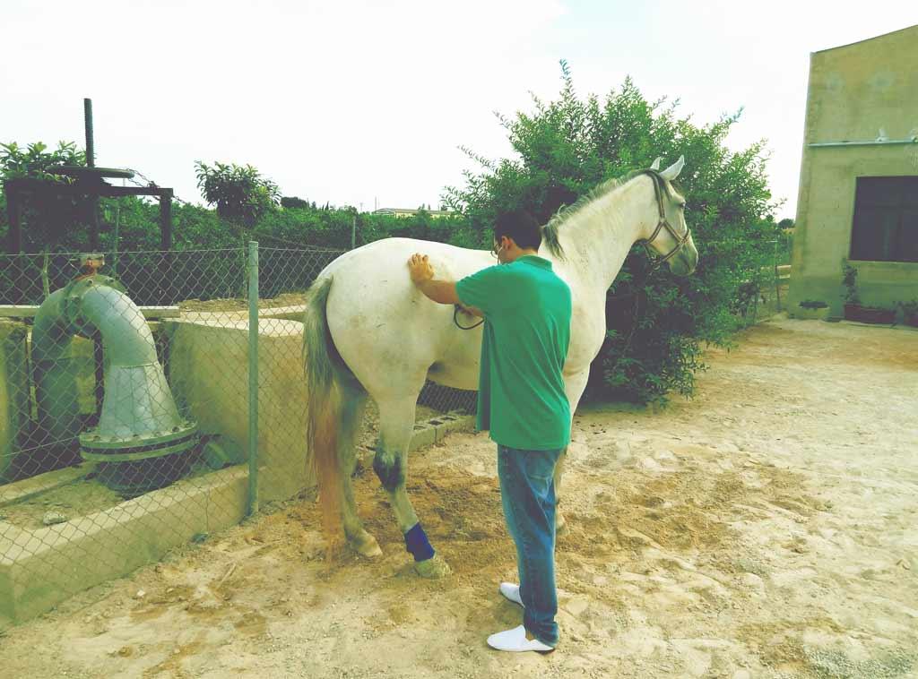 Veterinario de caballos Alicante