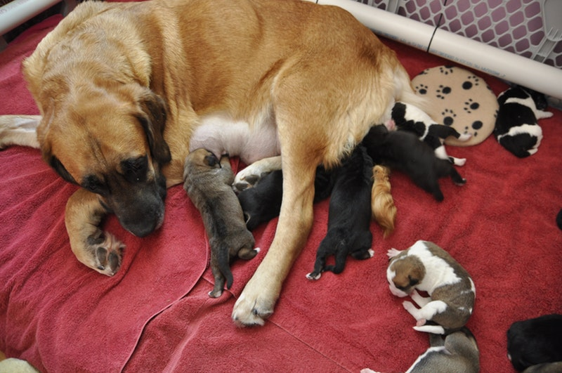 cuidados básicos cachorros perro o gato
