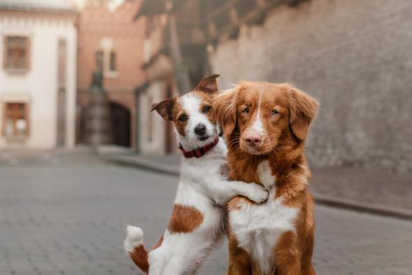 monta de perros