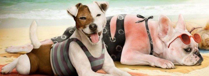 quemaduras solares en perros