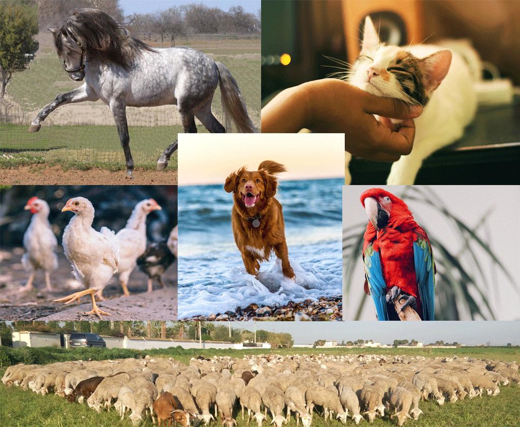 veterinario muchos animales